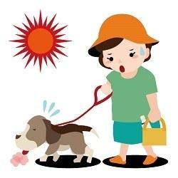 炎天下の犬の散歩.jpg